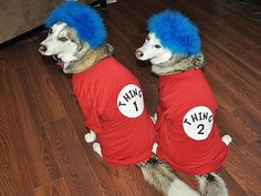 Pets in Costumes: Your Spook-tacular Halloween Furballs! - THING 1 & THING 2 - Halloween : People.com