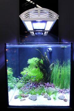 Goldfish Aquarium, Glass Aquarium, Aquarium Fish Tank, Planted Aquarium, Aquascaping, Nano Cube, Nano Tank, Two Fish, Fish Tanks