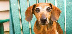 9 Ways to Help an Arthritic or Aging Dog #healthy #furrybestfriend