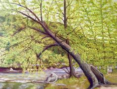 """Painting Below the Ledges"" 2016 oil on canvas, 16"" x 20"" (This iconic tree is in the Ledges Park, on the French Broad River north of Woodfin, NC)"