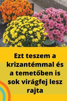 Gardens, Plant, Tuin, Garden, Formal Gardens