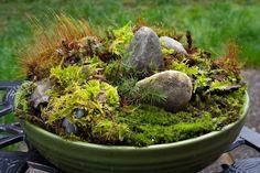 tabletop moss garden from http://whoneedsthegrass.blogspot.com/