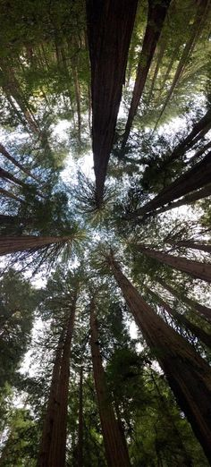 Muir Woods National Monument (Mill Valley, CA): Hours, Address, Tickets & Tours, Forest Reviews - TripAdvisor