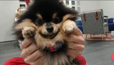 Our cute Yeontan Bts Taehyung, Jimin, Bts Dogs, Shop Bts, Min Holly, Frases Bts, Vkook, Yoongi, Bts Photo
