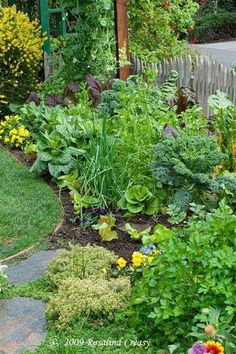 Vegetables in a garden border.