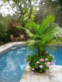 If you are working with the best backyard pool landscaping ideas there are lot of choices. You need to look into your budget for backyard landscaping ideas Outdoor Gardens, Pool Landscaping, Pool Patio, Porch Flowers, Pool Plants, Tropical Backyard, Outdoor Plants, Backyard Landscaping, Palm Trees Garden
