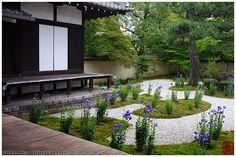 https://flic.kr/p/uwArCK | Bellflower season in Rozan-ji temple, Kyoto |