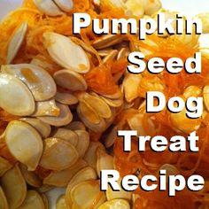 Puppy Pumpkin Seed Dog Treat Recipe