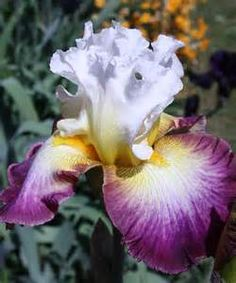 starship enterprise iris - Bing Images