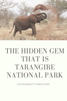 Will you be going on safari this summer? If so, is Tarangire National Park on your itinerary? In this post, I tell you why, though it is often overlooked, Tarangire National Park is well worth a visit. Read the post now! Game Reserve, African Safari, Nature Reserve, Africa Travel, You Are The Father, Tanzania, Circuit, Travel Tips, National Parks