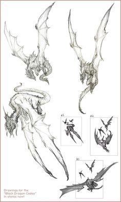 "Drawings for the ""Black Dragon Codex"" Creature Concept Art, Creature Design, Creature Drawings, Animal Drawings, Fantasy Creatures, Mythical Creatures, Dragon Anatomy, Dragon Artwork, Dragon Drawings"