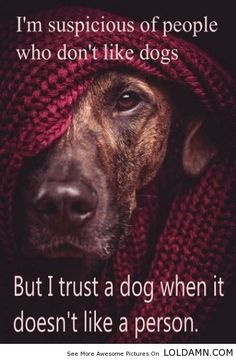 An Inspirational Quote About Dog And People.