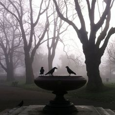 The Telegraph's online picture editor, David Sim, took this photo of crows perched on a fountain in a foggy Kennington Park.