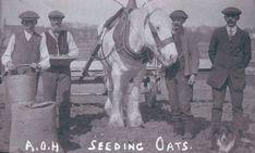 Farm workers seeding oats