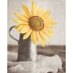 Sunflower Photo, Sunflower Still Life Photo, Rustic Decor, Shabby Chic... ($25) ❤ liked on Polyvore featuring home, home decor, yellow home decor and yellow home accessories