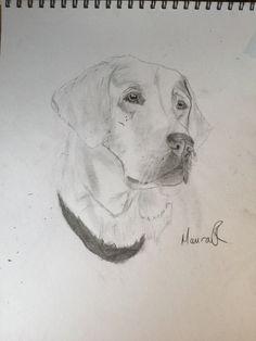 how to draw a labrador step by step