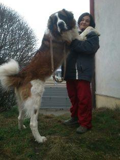 Moscow watchdog, 21.months