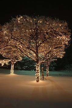 Christmas lights in trees