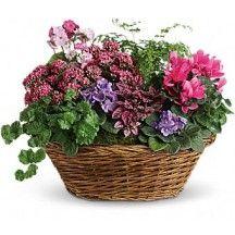 United States - Plant Basket
