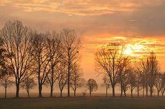 Im #Seeland wurde in #Schweiz, Gampelen aufgenommen und hat folgende Stichwörter: Bäume im Nebel Sonnenaufgang.  #Switzerland