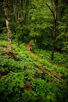 Minnesota - Cuyuna Lakes Mountain Bike Trail Image