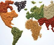 Seasonings and Spices - Food Business News |