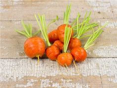 Carrot, Parisienne | Baker Creek Heirloom Seed Co Small, round carrots that are so popular in France. Tender, orange globes are superb lightly steamed. Easy to grow even in heavy soils. This little carrot is great for home and market gardens, as this variety is fairly uniform.
