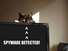 #funny #cat #spyware