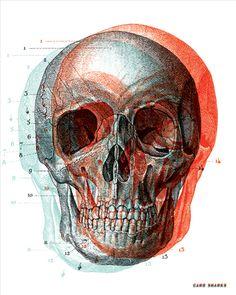 3-d skull