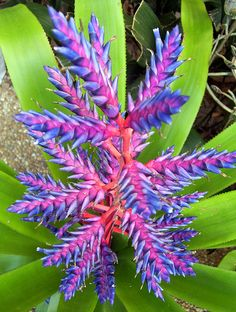 Gorgeous bloom, no idea what this is It looks very similar to a bromeliad I have.