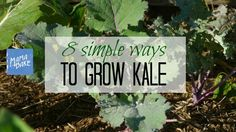 8 Simple Tips to Grow Your Own Kale - MamaBake Word To Your Mother, Food Basics, Grow Your Own, Vegetable Gardening, Diy Food, Simple Way, Kale, How To Plan, Vegetables