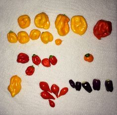 First harvest (red and yellow), and Chilli Plant, Orange, Yellow, Harvest, Vegetables, Purple, Hot, Vegetable Recipes, Purple Stuff