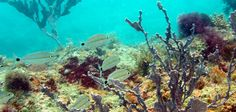 abrolhos coral reefs - Pesquisa Google