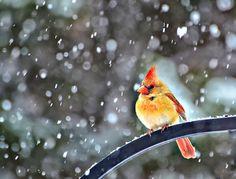 Such a beautiful bird