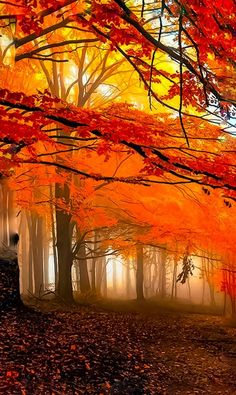 Colors of Autumn Leaves - Stefanie D. - Colors of Autumn Leaves Herbstzauber:) - Beautiful World, Beautiful Places, Beautiful Pictures, Trees Beautiful, Beautiful Islands, Autumn Scenery, Fall Pictures, Belle Photo, Beautiful Landscapes