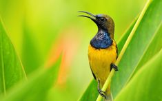 Ultra HD bird wildlife