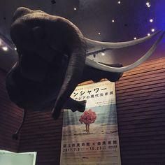 うおお so huge haha  #sunshower #moriartmuseum #elephant #森美術館 #1日1アート #everydayart