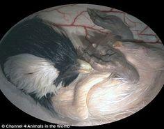 Desde pequeños igualitos a mamá: embriones animales (Fotos) | Planeta Curioso