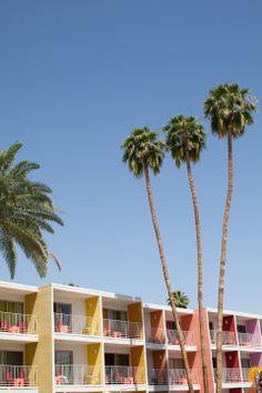 Palm Springs. I love palm trees. I live in lame-o Oklahoma where we could never grow a palm tree.