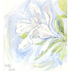 Charles Blaze Vukovich Watercolor - Azalea (1.291.590 COP) ❤ liked on Polyvore featuring home, home decor, wall art, prints, paper wall art and watercolor wall art