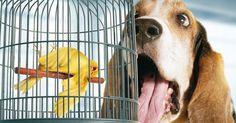 4 Reasons Your Dog Has Bad Breath