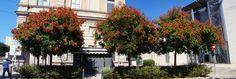 Ancona, Marche, Italy -The three trees - by Gianni Del Bufalo CC BY-NC-SA   stitch photo - DSC01040_42