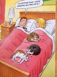 Funny Cat Jokes, Funny Animal Memes, Cute Funny Animals, Funny Animal Pictures, Cat Memes, Cute Cats, Funny Cats, Cats Humor, Funny Horses