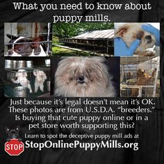A USDA licensed puppy mill is still a puppy mill. With one inspection a year and no staff to follow up... these dogs have almost no protection. Animals Information, Puppy Mills, Know The Truth, Animal Cruelty, True Facts, Pet Store, Cool Things To Make, Need To Know, Doggies