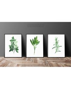 Green Herbs Set of 3 Art Print, Parsley Painting, Rosemary Kitchen Decor, Sage Watercolor, Green Wall Decor
