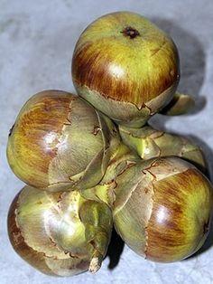 Palmyra fruits