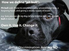 discrimination to pit bulls essay Pit bulls are a misunderstood breed pit bulls are the most misunderstood dog breeds in the world  pit bull research paper  dog discrimination is a real thing .