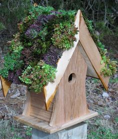 Pin by sonia henkin on Gardenimg Bird houses, Bird houses diy, Bird house feeder Tree Stump Fairy House Diy – Roccommunity Tree Stump . Garden Art, Garden Design, Sedum Roof, Bird House Feeder, Bird Feeders, Living Roofs, Living Walls, Bird House Kits, Bird Houses Diy