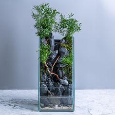 Aqua Decor, Mini Aquarium, Amazing Aquariums, Vivarium, Unique Gardens, New Builds, Water Tank, Betta, Water Features