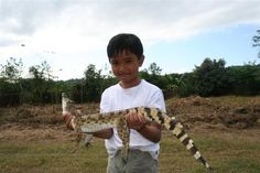 Rare crocodile increasing with grassroots conservation | Conservation | The Earth Times